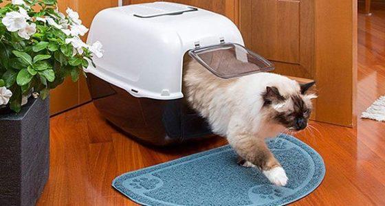Los 6 Mejores cajas de transportes para gatos 2021 – Comparativa
