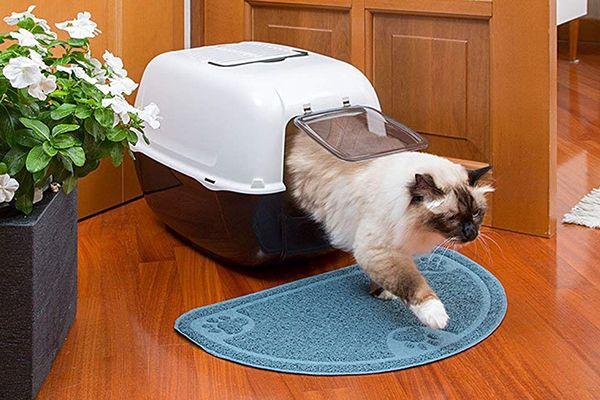 Los 6 Mejores cajas de transportes para gatos 2020 – Comparativa