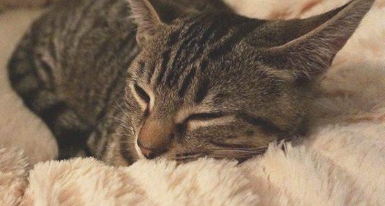 Las 7 Mejores cestas de gatos 2021: Comparativa