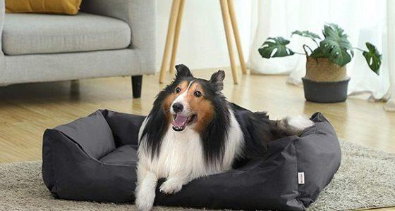 Las 6 Mejores canastas de perros 2020: Comparativa