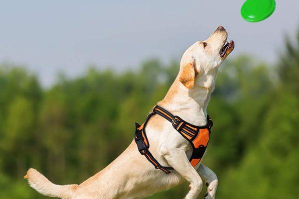 Los 5 Mejores arneses para perros 2020